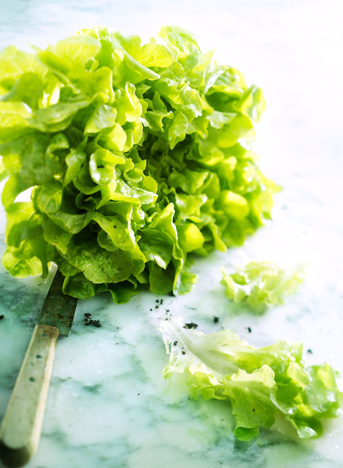 Food styling photography of lettuce with a knife made by Studio_m Photography Amsterdam